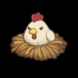 nesting-chicken